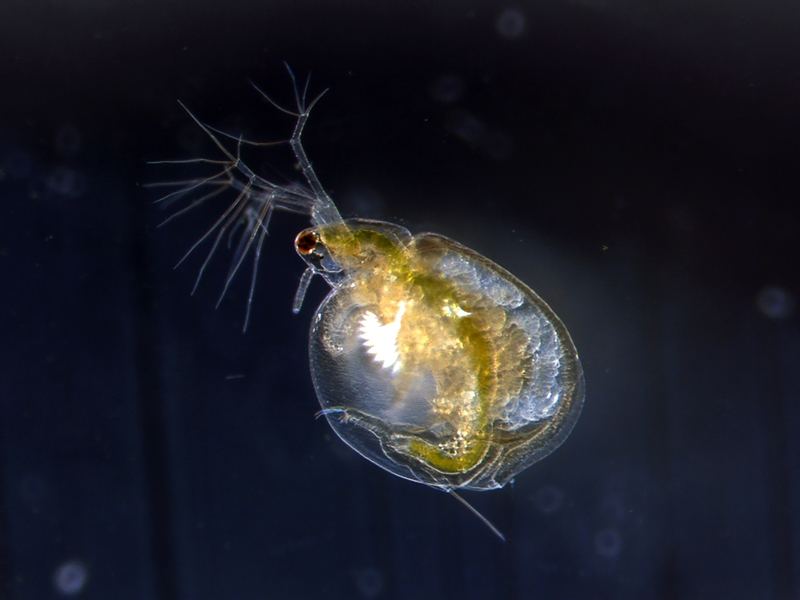 Hydra viridissima are just one of the species monitored under the Water Quality Program.
